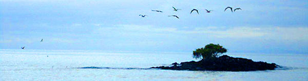 Galapagos Island with birds flying over
