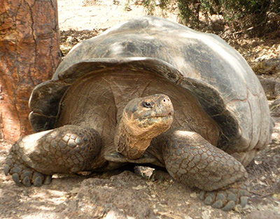 Evolution at work: the tortoise and the gift tax